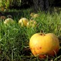 Gartenernte im Herbst
