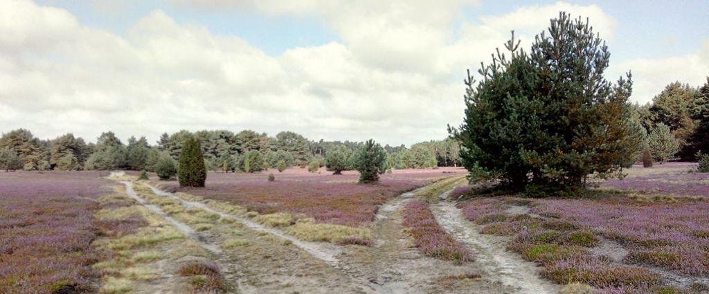 Weggeabelung Heide ©A.Heyn